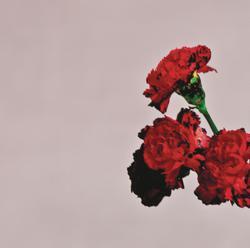 album-detail-cover